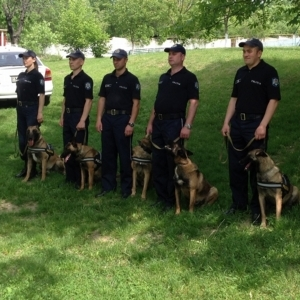 Handler & Instructor Training